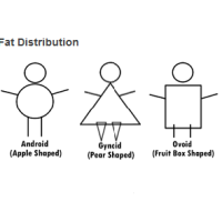 Your Body Shape and Body Fat Distribution
