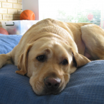 My furry baby Arnie passed away… And my get back into shape experiment