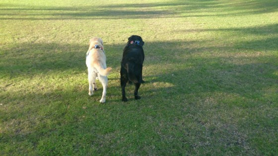 mayson-and-louie-at-park